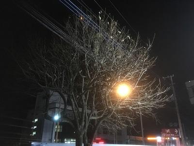 柿木2.JPG